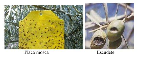 Informe fitosanitario 23 a 29-junio-14 foto 2
